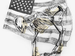Sheep Skeleton and Flag