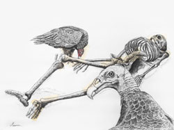 Vultures and Skeleton